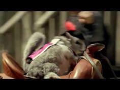 Las Vegas: Les Trois Chinchillas - YouTube