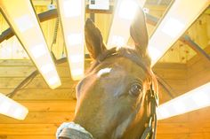 24 Best Equine Solarium Amp Infra Red Therapy Images On