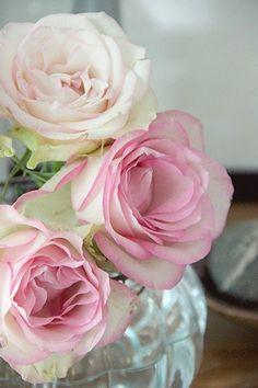 . flowers in vases