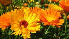 Seznam - najdu tam, co neznám Plants, Flowers, Flora, Plant, Planting
