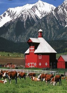 Octagon Barn & Cows - outside of Joseph Or - beautiful country.....