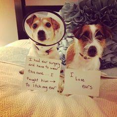 #Dog shaming
