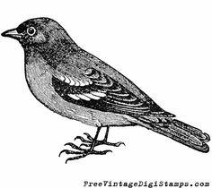 **FREE ViNTaGE DiGiTaL STaMPS**: Free Printable Image - Sweet Sparrow Bird