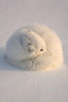 So cold..........!