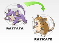 Rattata evolution