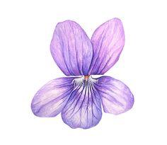 Violet by Anna Mason - square print Watercolor Flowers, Watercolor Paintings, Watercolour, Violet Tattoo, Anna Mason, Japon Illustration, Sweet Violets, Botanical Prints, Spring Flowers
