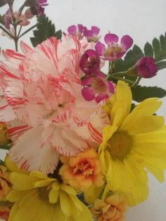Clavellina, margaritas  flor de cera  kalanchoe