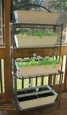 Use a baker's rack to hold winter salad plants!