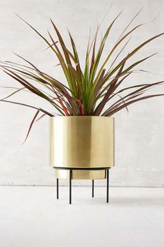 Ideal for both the home & garden, explore Urban Outfitters' collection of plants, planters & terrariums. Choose from a range of plant pots, vases and terrariums. Metal Planters, Indoor Planters, Gold Planter, Indoor Trees, Estilo Hollywood Regency, Terrariums, Home Decor Trends, Cozy House, Home Decor Accessories