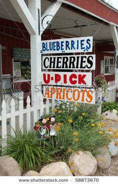 stock photo : Farmers fruit signs at U-pick farm in Michigan in Summer  shutterstock.com