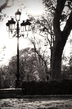 Black and White Framed Art Photo of Madrid's Ritiro Park at Sunset with Street Lamp and Statue.