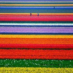 Colourful Holland