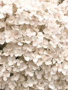 flowers beige The Euhemerist Cream Aesthetic, Classy Aesthetic, Brown Aesthetic, Flower Aesthetic, Aesthetic Collage, Aesthetic Anime, Photo Wall Collage, Picture Wall, Aesthetic Backgrounds
