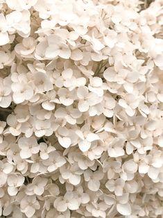 flowers beige The Euhemerist Cream Aesthetic, Brown Aesthetic, Flower Aesthetic, Aesthetic Collage, Aesthetic Anime, Aesthetic Backgrounds, Aesthetic Iphone Wallpaper, Aesthetic Wallpapers, Photo Wall Collage