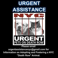 Please help us keep our dogs safe, and keep our threads open to public comment, by encouraging interested parties to reach out to urgentassistancenyc@gmail.com.  **If possible, please include a link to the dog's picture in your email.**  Our dedicated, approved help desk crew will do their best to guide potential foster/adopters through the process of saving a NYC ACC dog, while also keeping in mind that yes, there are worse fates than ACC...