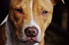 A pit bull puppy was brutally beaten, stabbed, and locked inside a suitcase for days. He died of his injuries several days later and the perpetrators have yet to be found. Demand that once they are identified they are punished severely.