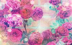 anna moreeva - greeting card on International W Anna, Greeting Cards, Rose, Flowers, Plants, Photography, Design, Pink, Photograph