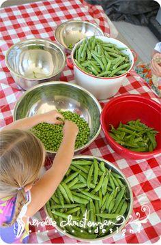 Ecosser les petits pois et garder les mains de dedans pour jouer avec... / shelling peas