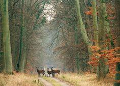 Forêt domaniale de Compiègne - que de beaux souvenirs (le jogging du diamnche, la course aux oeufs à Pâques, les surprises au détour d'une allée...)