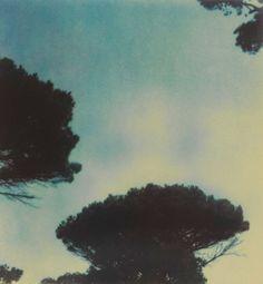 Cy Twombly polaroid - Trees, Capri