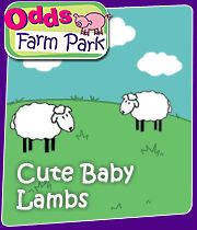 Check out the 20 best children's farms in Newbury, Berkshire in 2020 - plus 72 top animals days out near you right now. Baby Lamb, Great Days Out, Pet Day, Big Project, Farms, Cute Babies, Kids, Haciendas, Homesteads