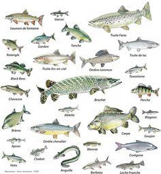 Les poissons - i pesci