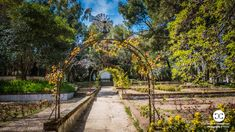 Digital Product Thumbnail - Spring in Madrid at Quinta de Molinos Almonds Park Spring Photography, Travel Images, Almonds, Railroad Tracks, Madrid, Sidewalk, Park, Digital, Side Walkway
