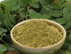 Moringa: One Of The World's Most Abundant Sources of Vitamins And Minerals - Reset.me