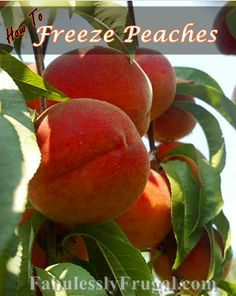 How to Freeze Peaches.  Step by step tutorial on freezing peaches.  Keeps that fresh delicious taste!  http://fabulesslyfrugal.com/2012/08/how-to-freeze-peaches.html