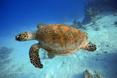 """Swimming Turtle Go to http://iBoatCity.com and use code PINTEREST for free shipping on your first order! (Lower 48 USA Only). Sign up for our email newsletter to get your free guide: """"Boat Buyer's Guide for Beginners."""""""