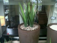 New plants for hotel´s entrance...