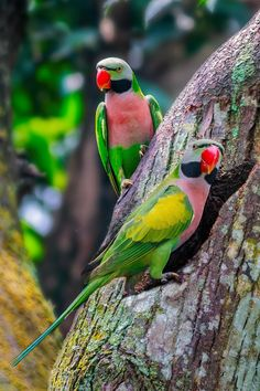Home, Sweet-Home: Our Lovely Home; by MazLoy Pretty Birds, Beautiful Birds, Animals Beautiful, Cute Animals, Kinds Of Birds, All Birds, Love Birds, Tropical Birds, Exotic Birds