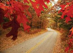 5 Fantastic Fall Drives: MN River Valley Scenic Byway, St Croix Byway, WI Northwoods, Historic Bluff Byway, Glacial Ridge Trail