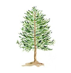 Pine Tree Print of original watercolor painting ,woodland, Holiday Christmas wall decor, pine green , nature, limited edition,.