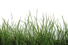 Architects Paper Fototapete Green Grass 470411 #Fototapete #ArchitectsPaper #tapetenshop