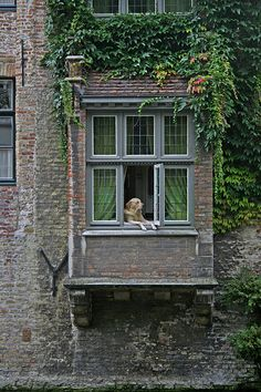 apparently this Dog of Bruges is famous for being in the window all day every day ...