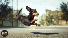 Elevate your workflow with the Animalia - Dachshund M asset from gim. Find this & other Animals options on the Unity Asset Store. Unreal Engine, Game Art, Dachshund, Unity, Animation, Invitation Templates, Dogs, Characters, Animals