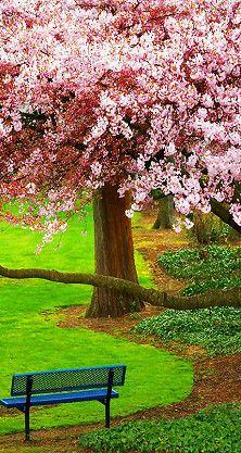 sous l'arbre en fleurs