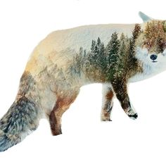 Wolf with forest design