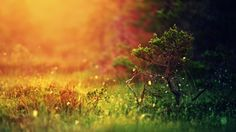 1920x1080-simple_background_grass_colorful_nature_landscape_trees_blurred_depth_of_field-744.jpg (1920×1080)