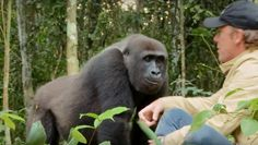 Damian Aspinall had raised Kwibi the gorilla like he would his own son, and after releasing the animalback into the wild, Aspinall wanted to visit him. It had been five years, though, and Kwibi had become known as an aggressive beast. Even so, the English millionaire was determined. So it was that, deep in the ...