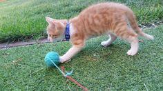 JACK - Gato adoptado - AsoKa el Grande