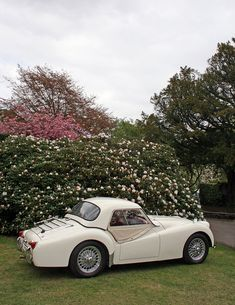 This is so Cute!  Triumph TR3 (1957) by Albert S. Bite, via Flickr