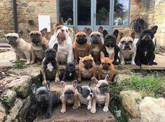 Fotka uživatele Laydák Obecný Obecný. French Bulldogs ❤