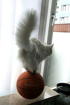 Cat !!!
