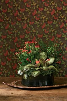 Echo Reds and Greens - Indoor Container Gardening Ideas - Southernliving. Inspired by the pattern in the walls that surround it, this planter celebrates red, a vibrant shade that seems to give the wallpaper a third dimension. Pairing an upright grower with a plant that grows horizontally provides a stairstep of color and a diagonal line for the eye to follow.      CONTAINER RECIPE   1. red flowering kalanchoe   2. mahogany fern (Didymochlaena trunculata)   3. episcia (E. cupreata 'Silver…