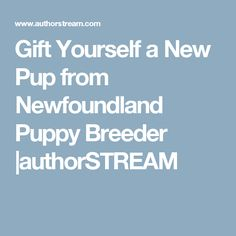 Gift Yourself a New Pup from Newfoundland Puppy Breeder  |authorSTREAM