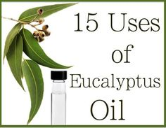 15 Uses of Eucalyptus Oil