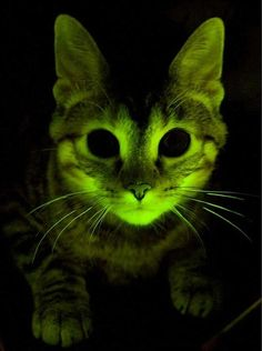 radioactive kitty