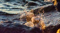 Golden Wave - Kultainen aalto by Pauliina Kuikka